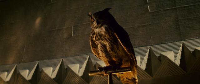 tyrell horned owl